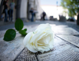 Remembering the White Rose Foto: Jan Greune  / LMU