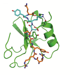 The image depicts the binding of the SKY peptide to CCL5 (green), which inhibits docking of HNP1 and thus prevents the formation of the HNP1-CCL5 heteromer.