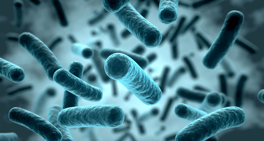 Bacteria must maintain cellular homeostasis in the face of environmental fluctuations. A sensor protein that simultaneously monitors the levels of both internal and external potassium helps them to do so. (Photo: norman blue / fotolia.com)