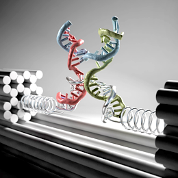 Nanoclamp made of DNA strands. Illustration: Christoph Hohmann