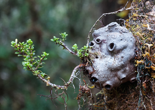Epiphyte with several entrance holes. Source: Dr. Ulrike Bauer (University of Bristol)