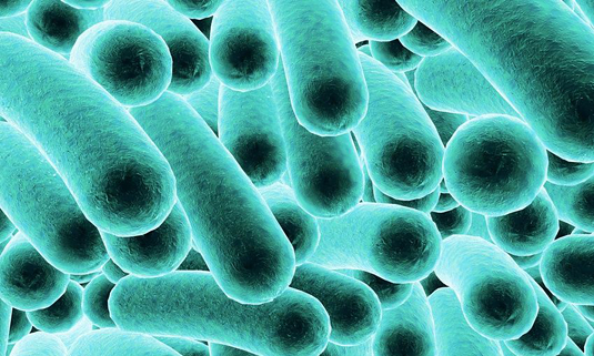 E. coli bacteria. Capture: Science RF/Fotolia