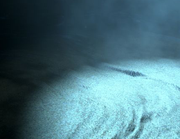Microorganisms living deep below the seafloor secrete enzymes to degrade organic  matter deposited in the sediments. Image: alswart / fotolia.com