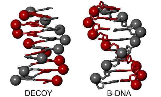 Representations of a B-DNA double helix and a single helical foldamer mimic. (Ivan Huc, LMU)
