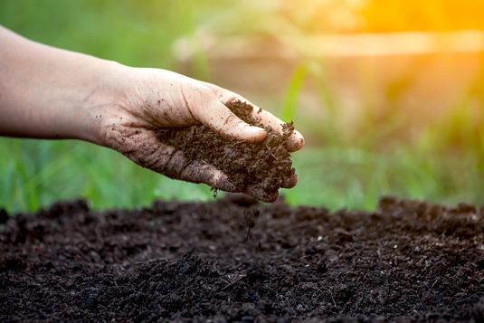 A single gram of soil can contain up to 10,000 different species of bacteria.