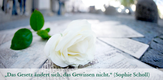 weisse_rose_535_web